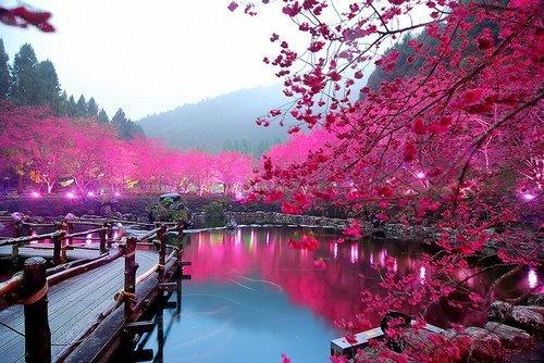 beautiful-photography-pink-water-Favim.com-425916